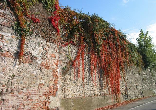 La cinta muraria del borgo di Salussola