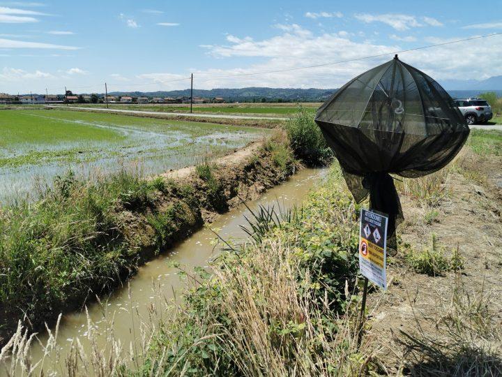 A Salussola un piano di controllo della Regione Piemonte per la popillia japonica