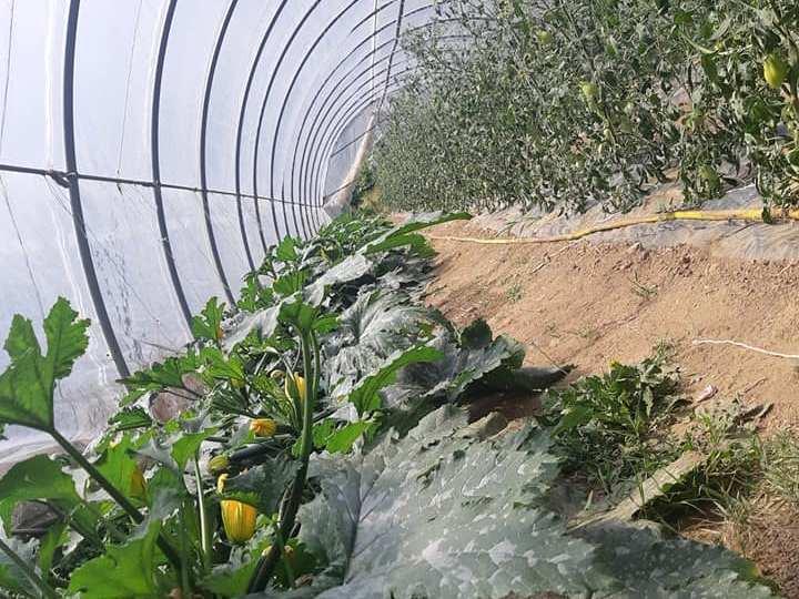 E' in piena produzione l'orto del Centro Agricolo Anffas di cascina Carrubi