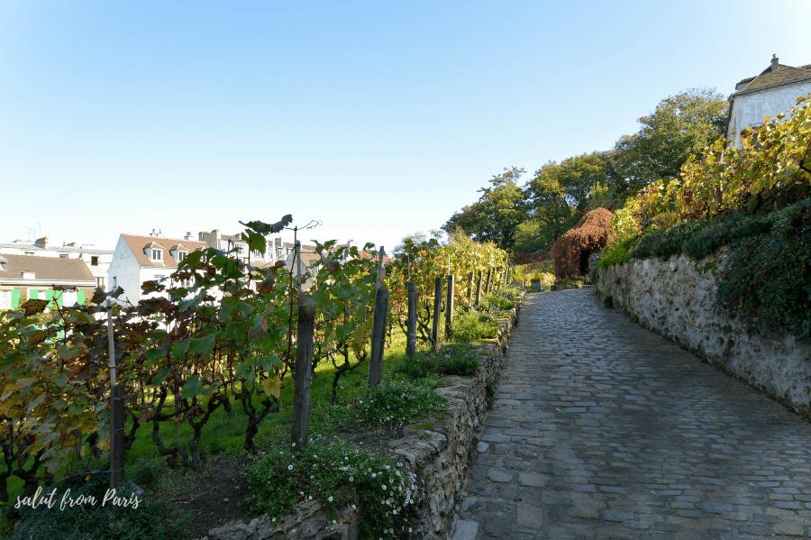 The Montmartre Grape Harvest Festival – back in 2021!