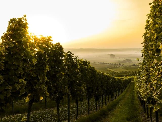 Visit Bordeaux or Champagne from Paris in fall 2020