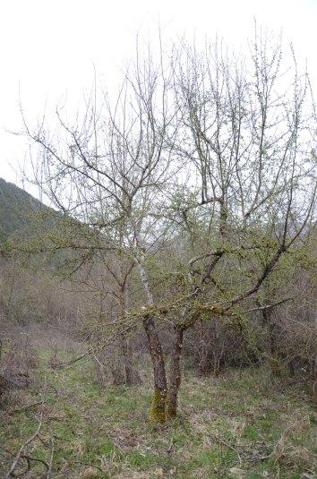 Potature – Pruning