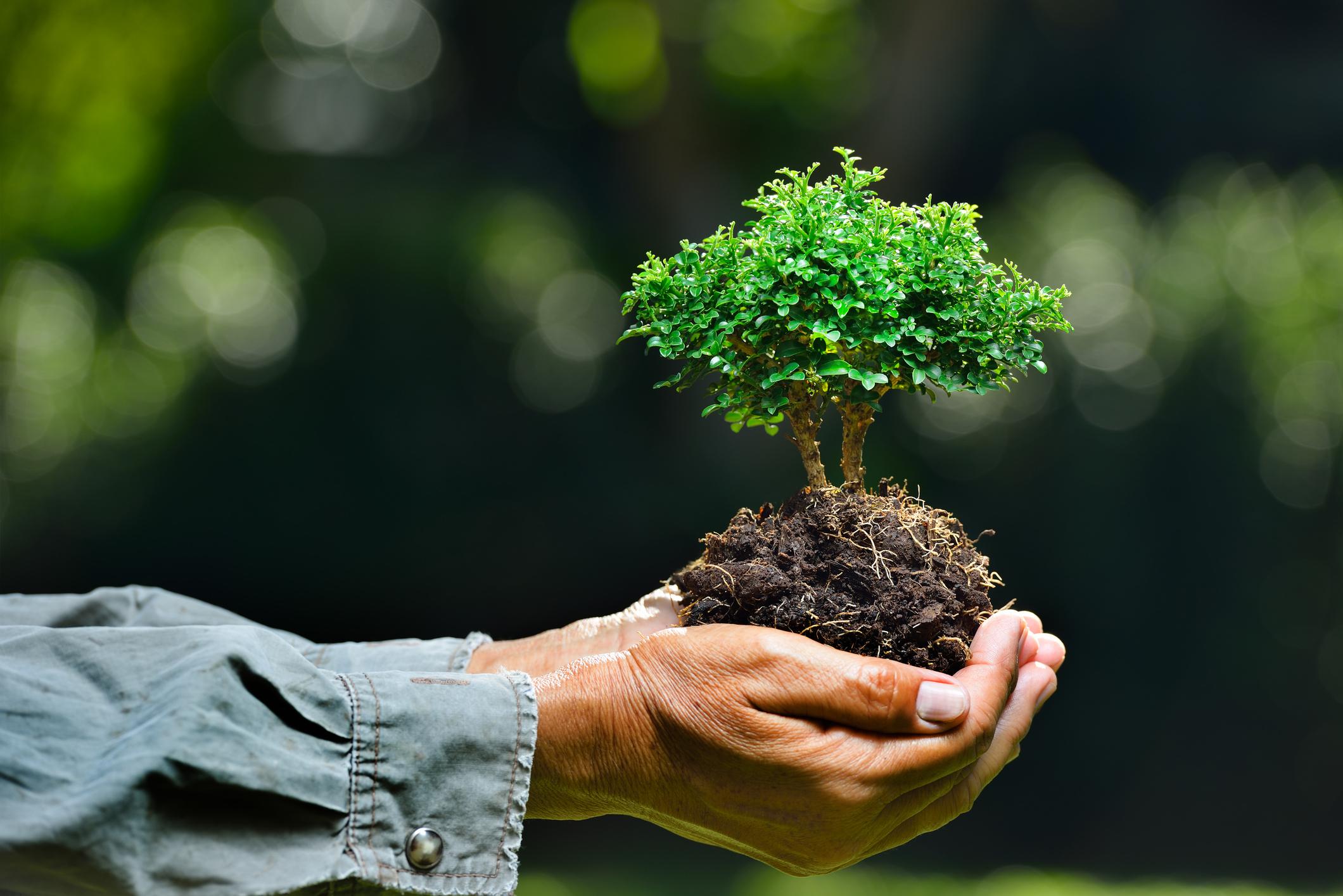 La tutela dell'ambiente tra diritto ed economia