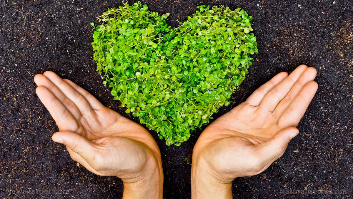 La disciplina sanzionatoria dell'inquinamento ambientale e del disastro ambientale