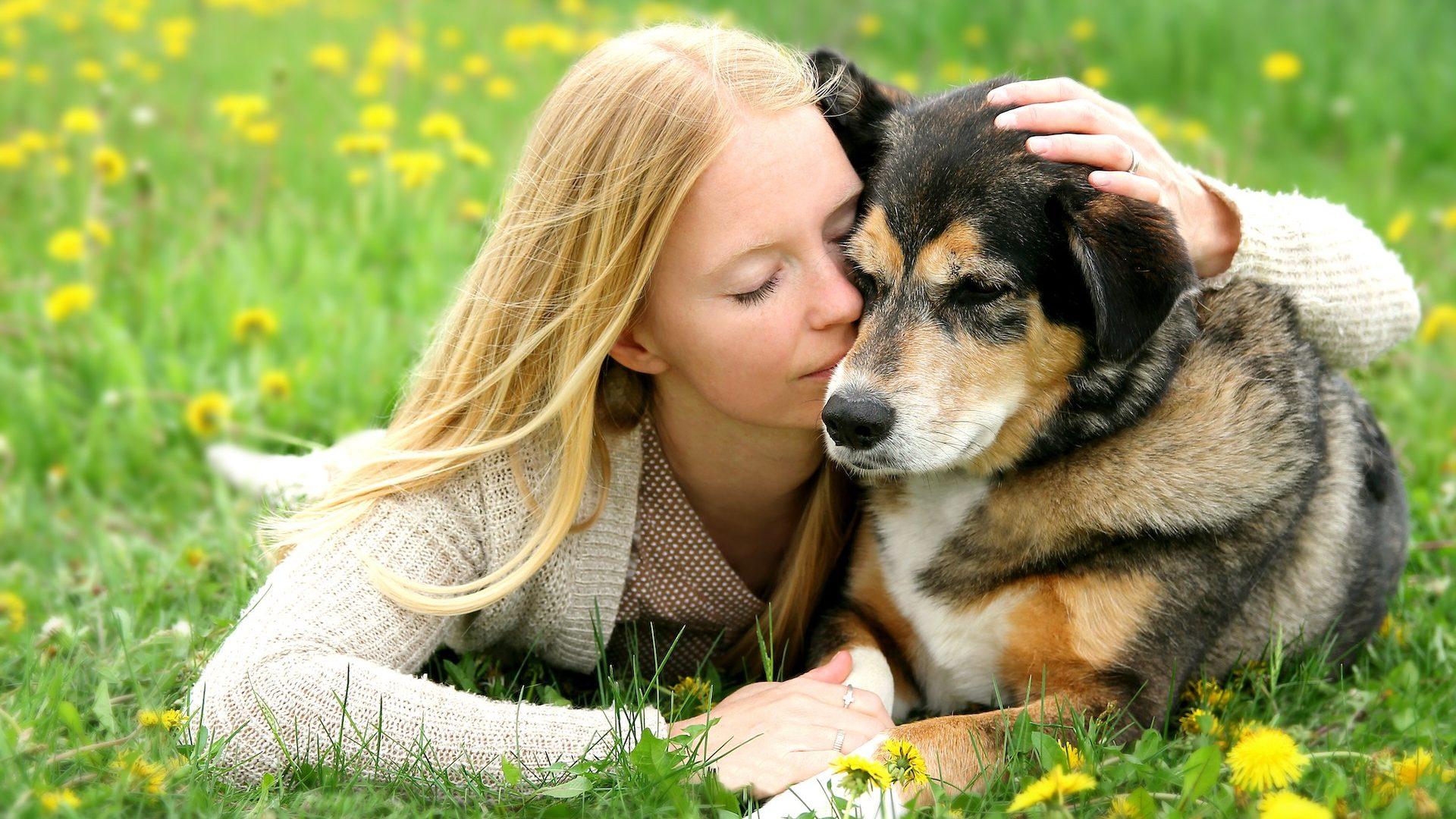 Il danno non patrimoniale per perdita dell'animale d'affezione