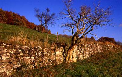 Lesesteinmauer aus der Nähe (Foto: Wiegand, Okt. 02, HM- XXVII-5)