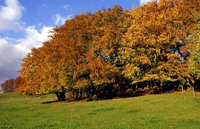 Hudewald von Süden gesehen (Foto: Wiegand, Okt. 02, HM-XXVI-38)
