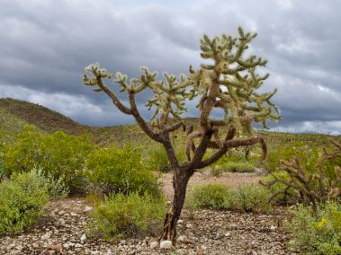 2020-03-13-organ-pipe-cactus-national-monument-bb