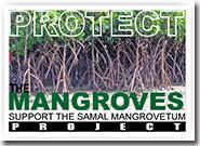 Mangrovetum Project, Samal Island