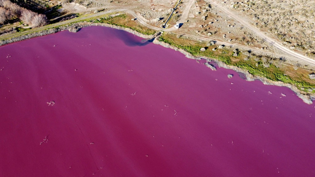 Pink Is For Pollution In This Lagoon In Patagonia, Argentina.