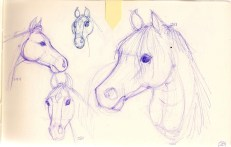 ballpoint pen sketches of horse heads