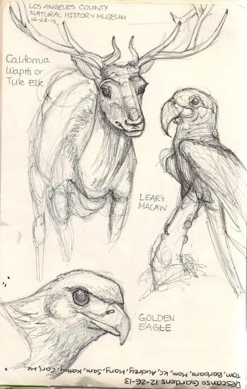 Tule Elk, Lear's MaCaw, Golden Eagle