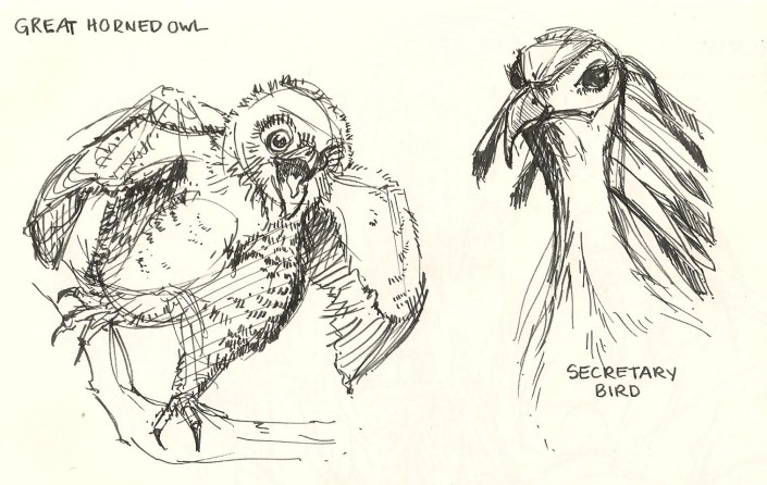 sketch of a baby great horned owl and a secretary bird.