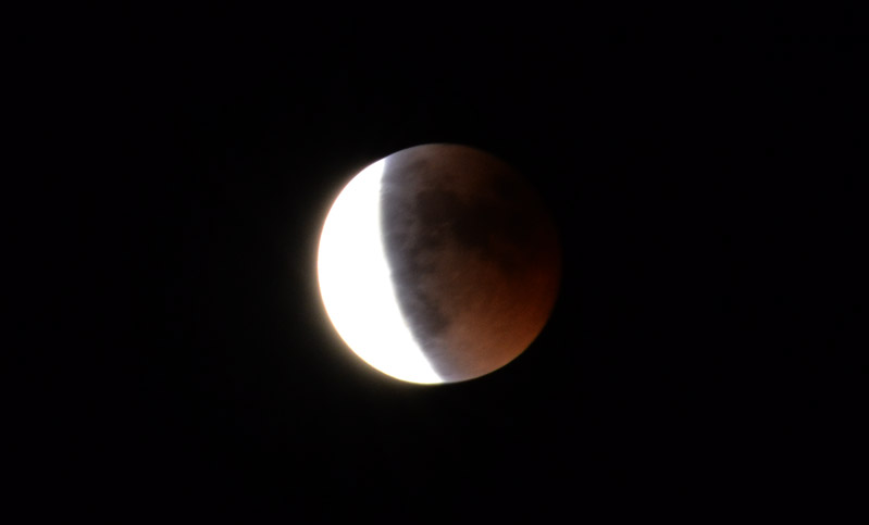 Rose - Lunar Eclipse