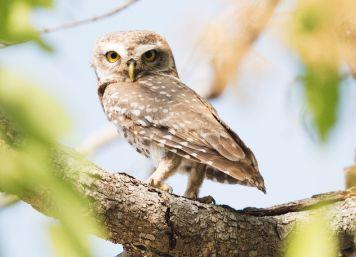 Owl. Photo credit: Vincent Van Zalinge