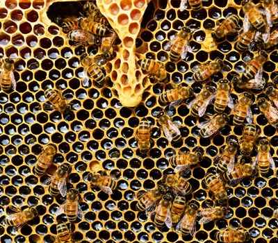 A Beehive Comparison: Which is the Best?