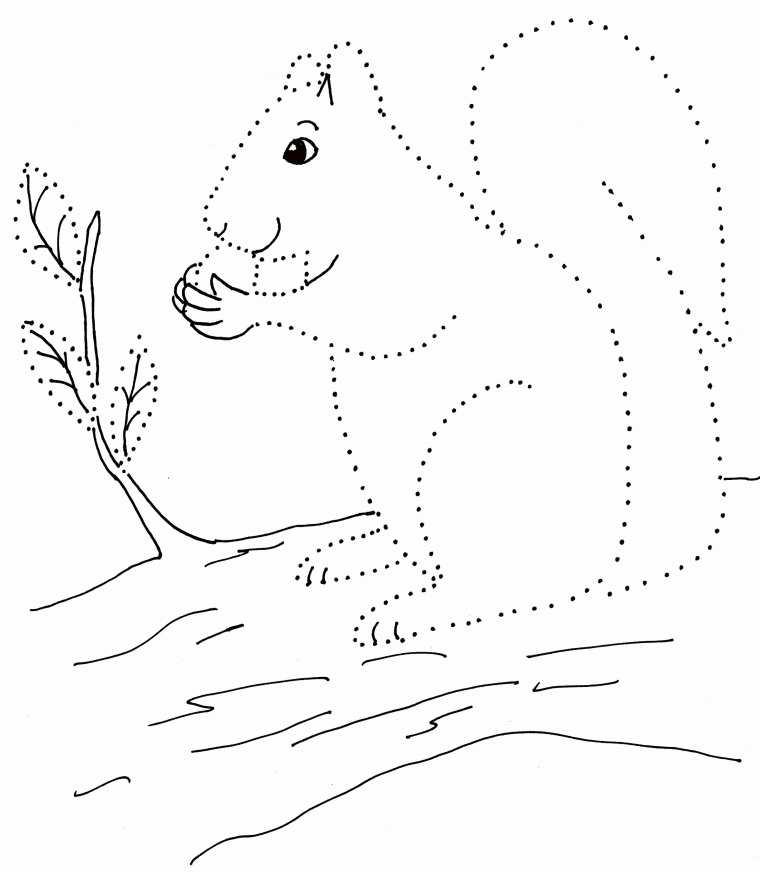 dot drawing squirrel art