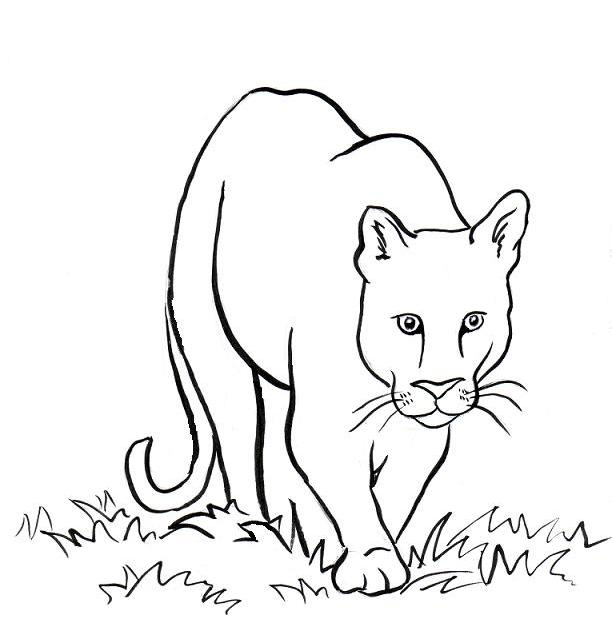 Mountain Lion Coloring Pages Getcoloringpagescom Sketch