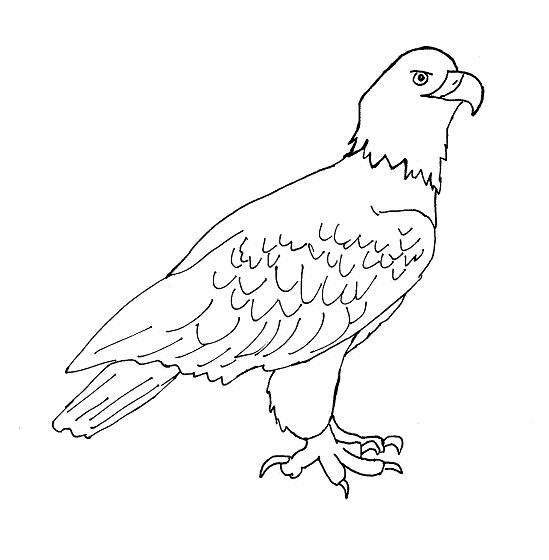 Easy Eagle Drawings