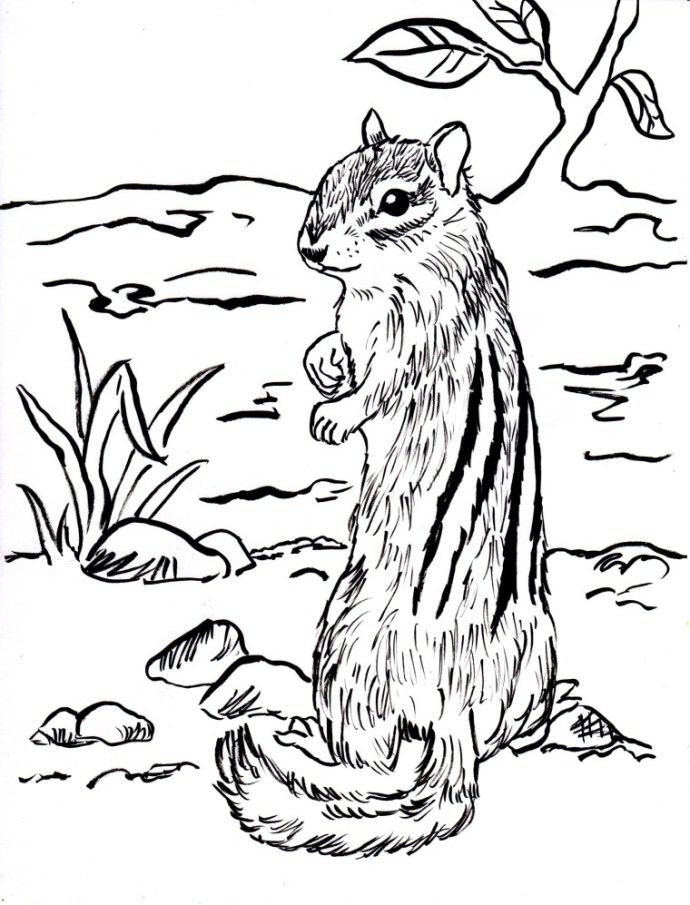 Chipmunk Coloring Sheets Coloring Pages for Kids