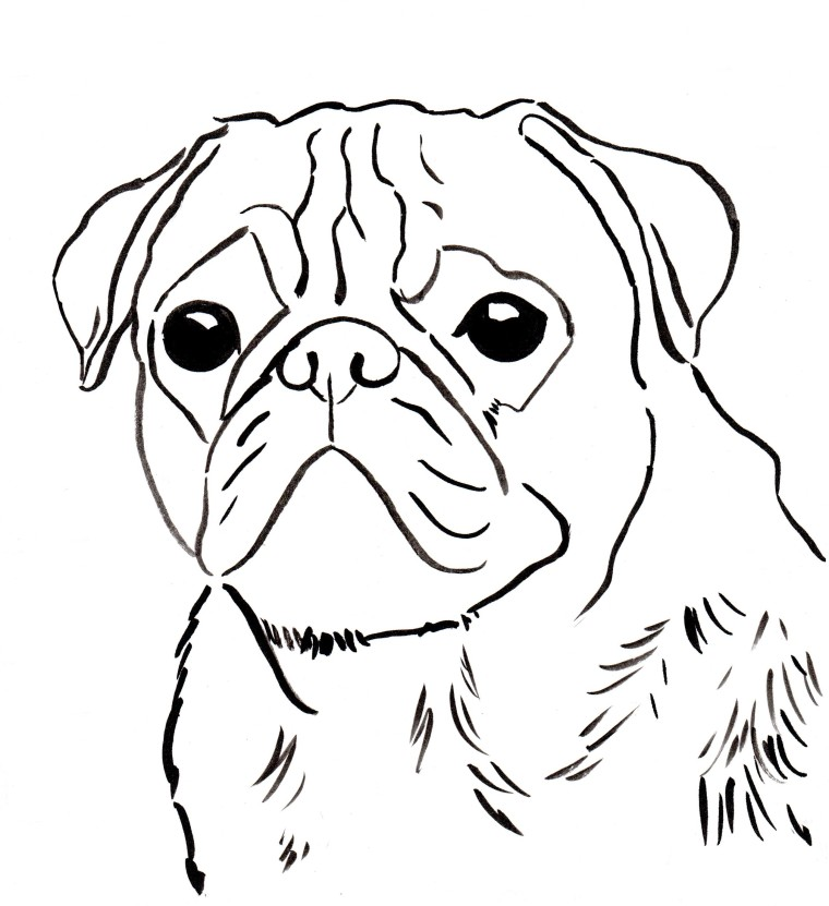 Free pug coloring page to download and print.