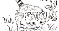 Kitten Coloring Page - Samantha Bell