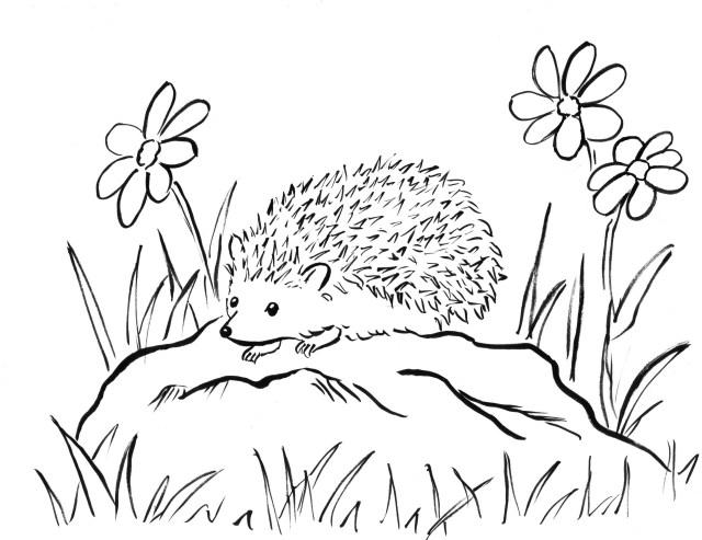 Hedgehog Coloring Page - Art Starts