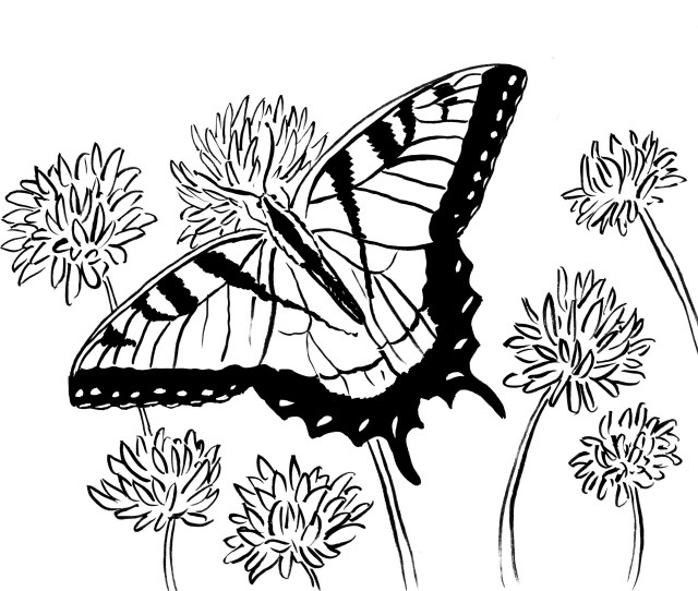 Swallowtail Butterfly Coloring Page Art Starts For Kids