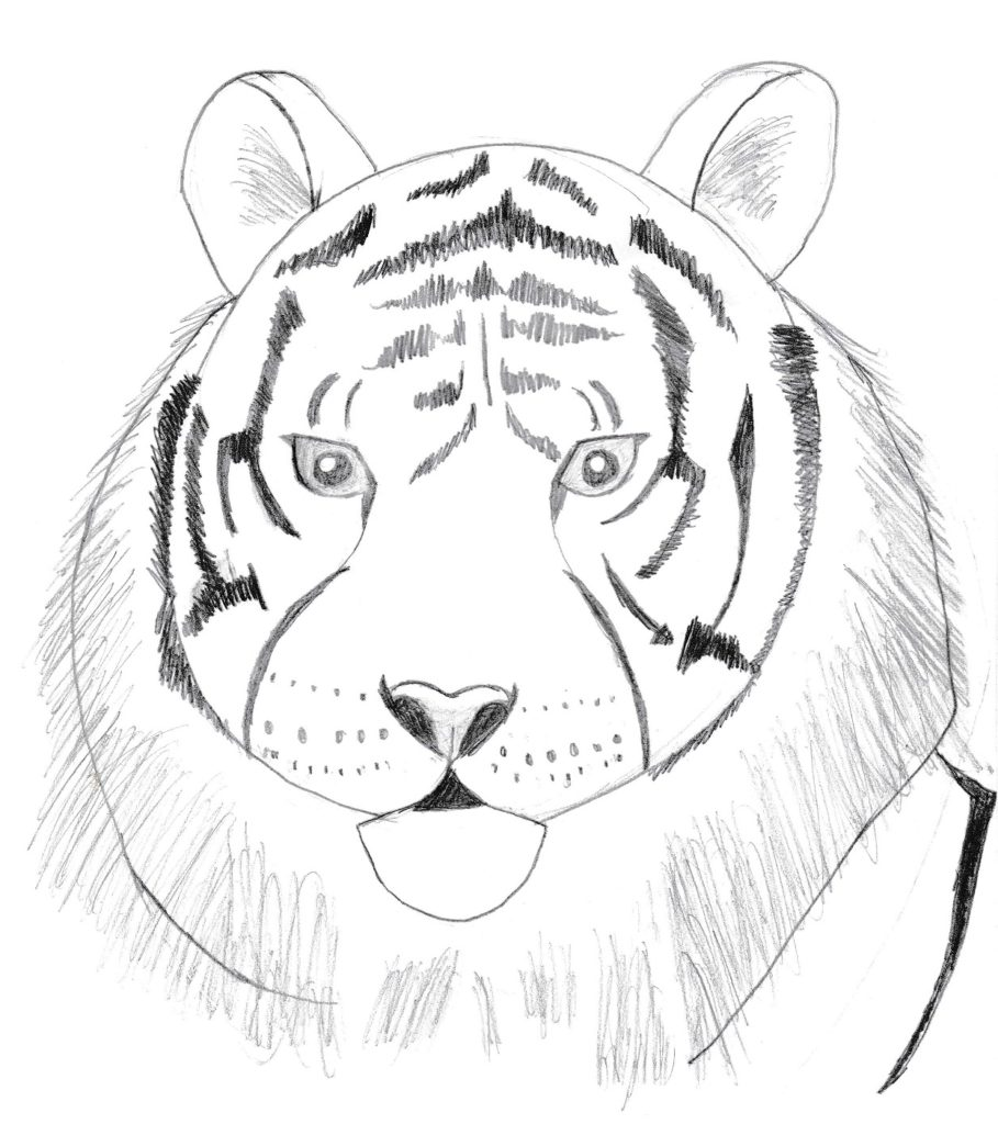 Draw 25 Wild Animals (Even If You Don't Know How to Draw