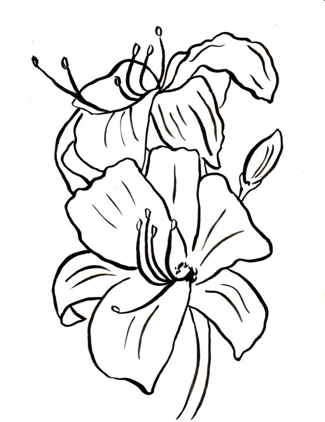 Lily Coloring Page - Art Starts