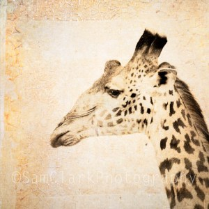 Giraffe ARTography - Serengeti National Park, Tanzania, East Africa