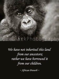 Inspired by Africa series - Baby Gorilla