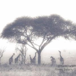 GMFU 2014-01 Uganda – Finalist BBC Wildlife Photographer of the Year Competition 2015