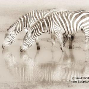 ZAK 2009-01 Kenya