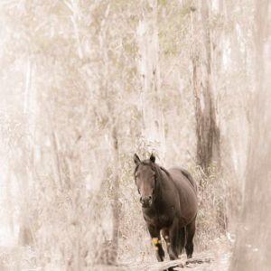 HBA 2015-02 Australia