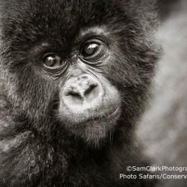 GVR 2009-01 Rwanda