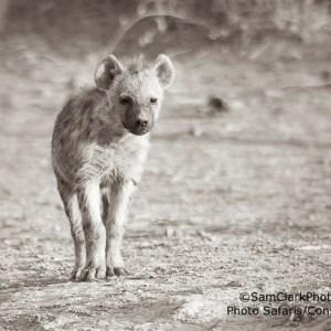 HAK 2009-01 Kenya