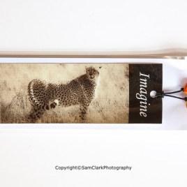 Cheetah – Imagine
