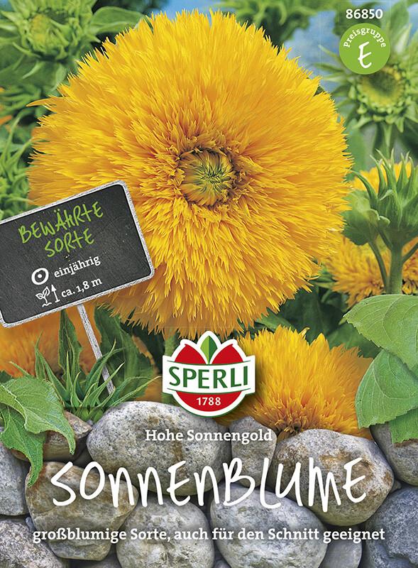 Sonnenblume Hohe Sonnengold  Samenshop24  Saatgutversand seit 1928