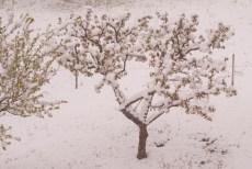 Schnee-Fruehling-1006686