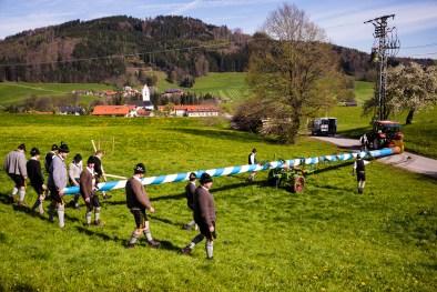 Maibaum-Rossholzen-1008419