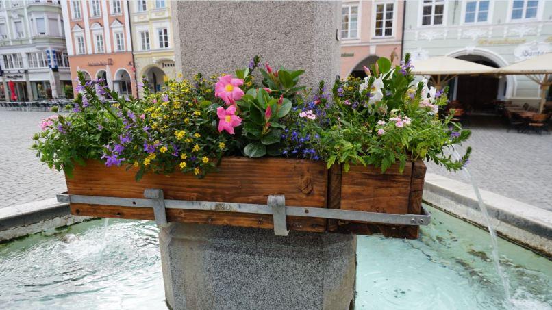 Blumenkasten_close