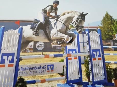Pferde Turnier (1)