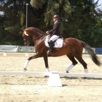 Pferde Turnier (2)