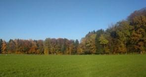 farbige Laubbäume und grüne Wiese