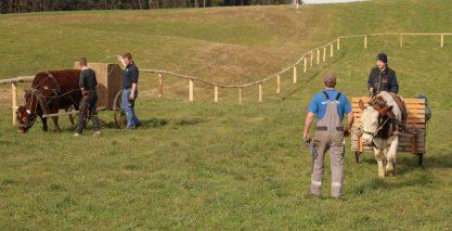wiwa ochsenrennen training05