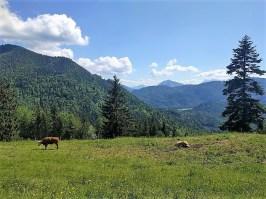 Alpenblick bei der Agergschwendalm