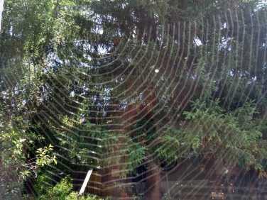 verwobener Blick durchs Spinnennetz (Foto: Josefa Staudhammer)