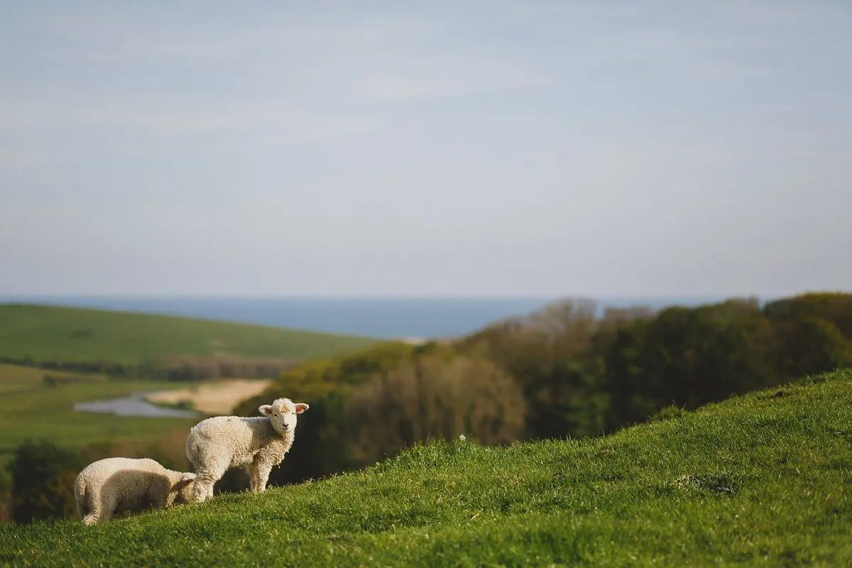 abbotsbury-engagement-photography-003