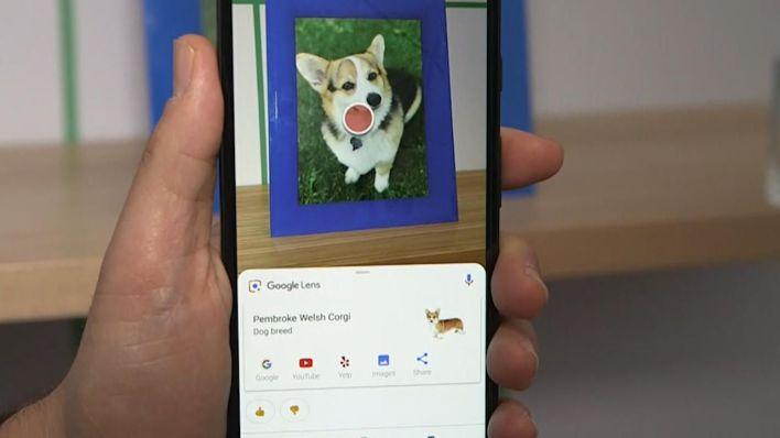 قوقل لينس يتعرف على فصيلة الكلب